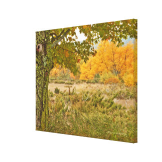 """""""TREES IN RURAL FIELD""""/GOLD AND GREEN PALETTE CANVAS PRINT"""
