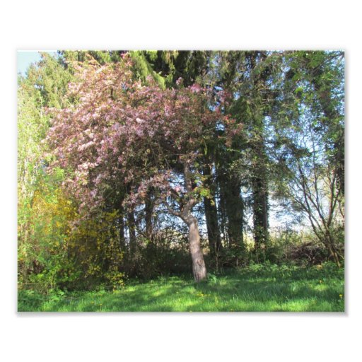 Trees in spring - energy picture photo print