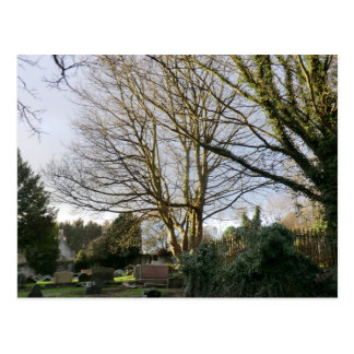 Trees in the Churchyard at Culross Postcard