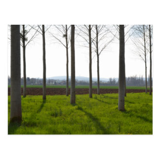 Trees in the French countryside Postcard