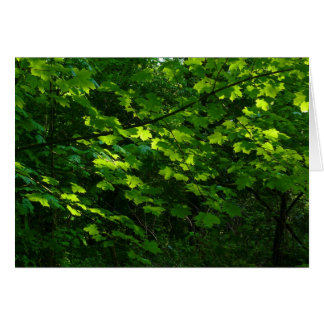 Trees in the Spring. Bute Park, Cardiff. Wales Greeting Card