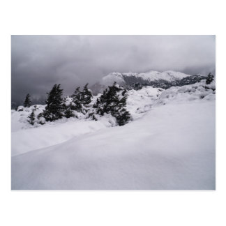 Trees in Thick Snow, Himalayan Mountains Postcard