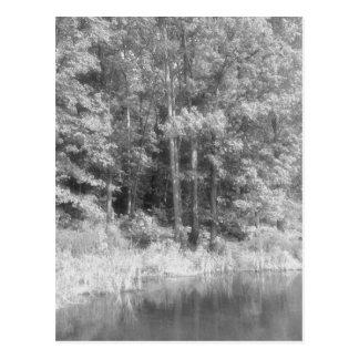 Trees.jpg Postal