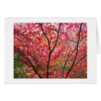 Trees & Leaves Card