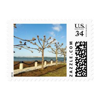 Trees Lining Harbor Postcard Stamp