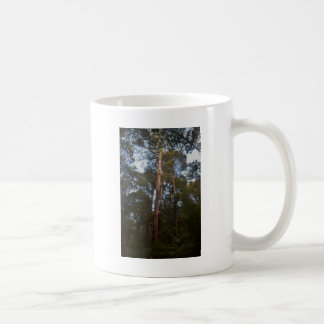 TREES MOUNT FIELD NATIONAL PARK TASMANIA COFFEE MUG