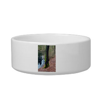 Trees Near Pond with Moss on its trunk Cat Bowls