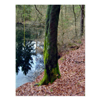 Trees Near Pond with Moss on its trunk Postcard