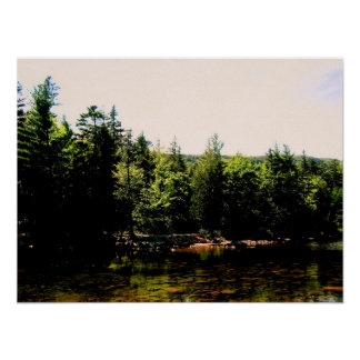 Trees of Acadia National Park Poster
