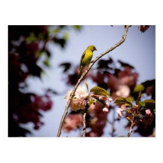 Trees of Birds Postcards