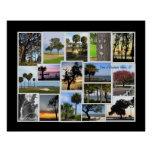 Trees of Daufuskie Island, SC Posters
