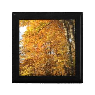Trees of Fall Keepsake Box