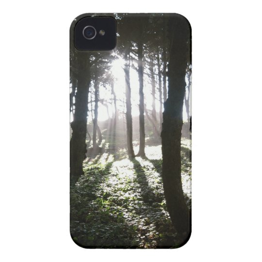 Tree's of light iPhone 4 cover