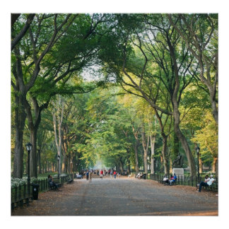 Trees on the Mall Poster