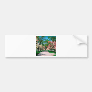 Trees Pink White Dogwood Lexington Kentucky Bumper Stickers