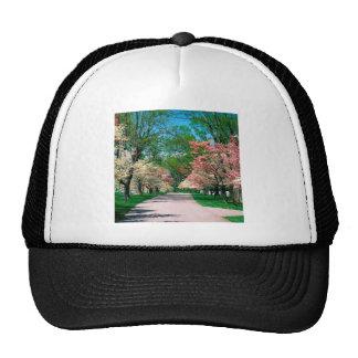 Trees Pink White Dogwood Lexington Kentucky Trucker Hats