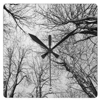 Trees Reaching For The Sky Square Wallclocks