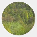 Trees Round Sticker