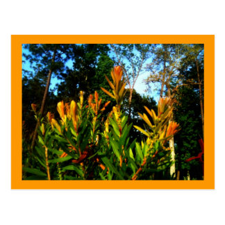 Trees Sing for Joy Postcard