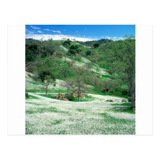 Trees Spring Wildflowers Oak Hills Kern Postcard
