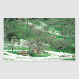 Trees Spring Wildflowers Oak Hills Kern Rectangular Sticker