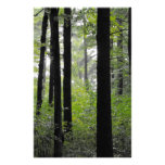 Trees Stationery Paper