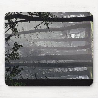 Trees, Tatton Park, Cheshire, England Mouse Pad