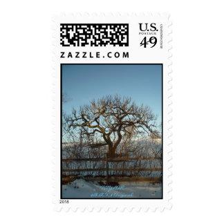 trees, TAYLOR$B.A.K.$ Original Postage Stamps
