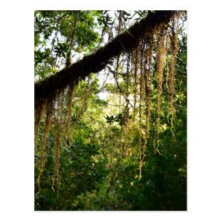 TREES WILDERNESS TASMANIA AUSTRALIA POSTCARD