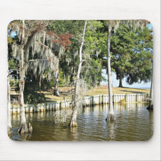 Trees with Spanish Moss growing in water Mousepad