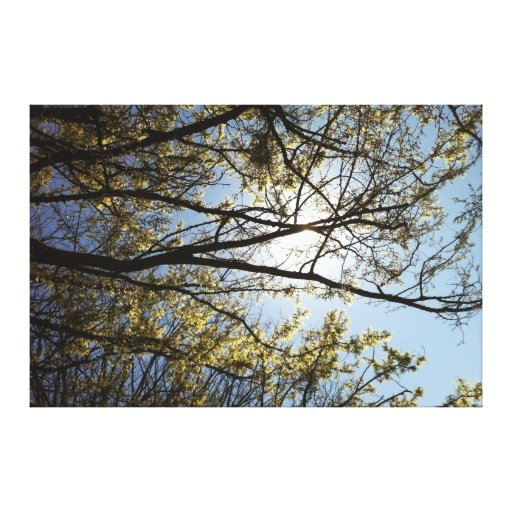 """""""Trees"""" Wrapped Canvas Stretched Canvas Prints"""