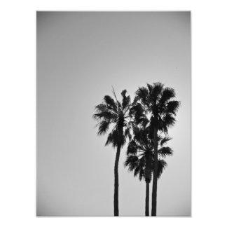 Treesome Fotografía