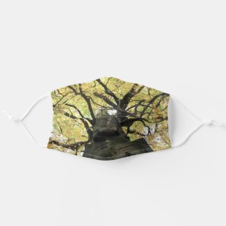 Treetop from Below - Tree of Life Cloth Face Mask
