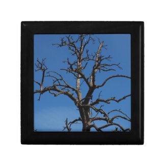 Treetop Gift Box