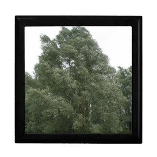 Treetops Gift Box