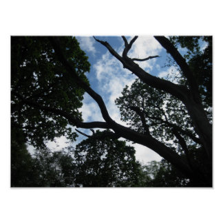 Treetops Glisten at Laird's Wood Poster