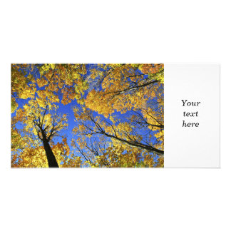 Treetops in autumn forest photo greeting card