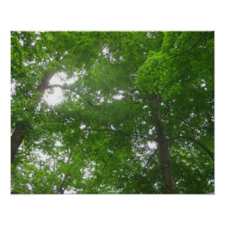 Treetops in Longwood Gardens Poster/ Print