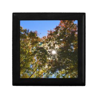 treetops keepsake box