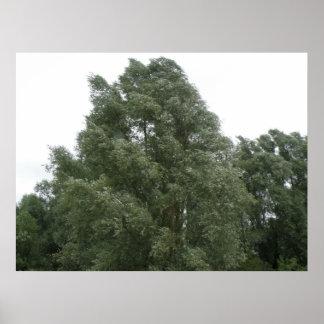 Treetops Print