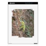 treetrunk cubierto en musgo skins para iPad 2
