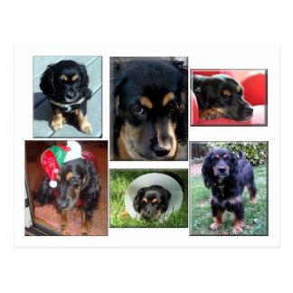 Trei-the puppy postcard