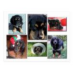 Trei-the puppy postcards