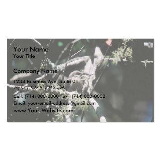 Trepatroncos enano plantillas de tarjetas de visita