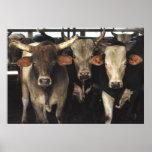 Tres amigos - Bull acobarda arte del oeste salvaje Póster