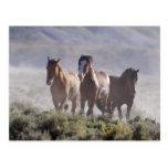 Tres amigos tarjetas postales