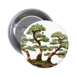 tres árboles de los bonsais del pino pins