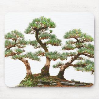 tres árboles de los bonsais del pino tapetes de raton