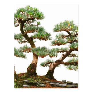 tres árboles de los bonsais del pino postal