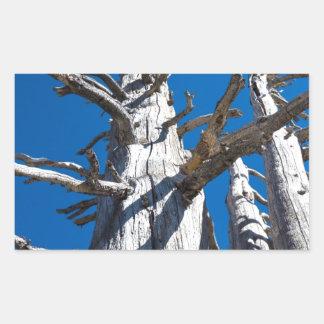 Tres árboles esqueléticos con el cielo azul pegatina rectangular